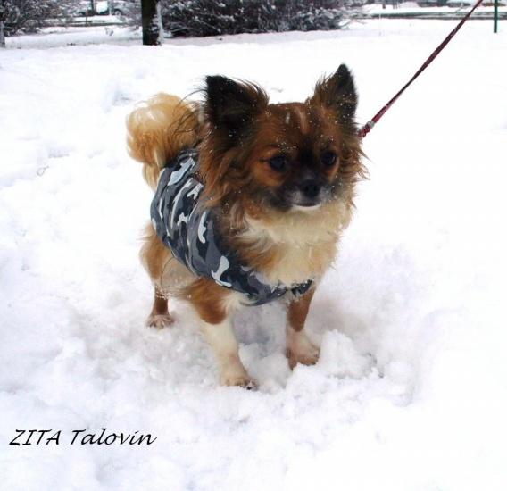 ZITA_1.jpg